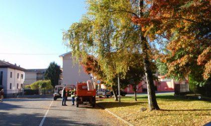 Cade da un albero: è grave volontario di Protezione civile