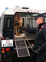 Ubriaco scappa al posto di blocco dei carabinieri