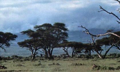 Kilimangiaro e Patagonia