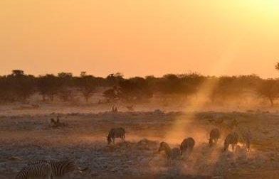La buona Africa