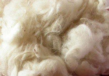 Da Biella, la battaglia alle fibre sintetiche