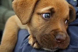 Maltratta un cagnolino