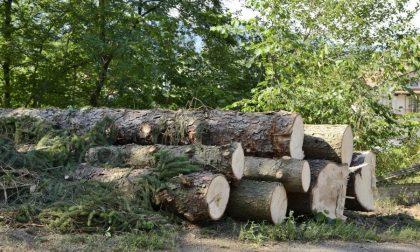 """""""Quegli alberi andavano tagliati"""""""