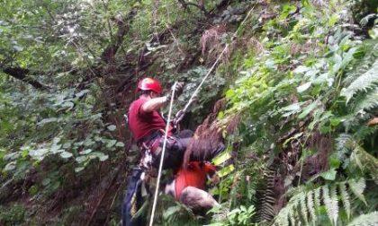 Cane salvato dai pompieri al Gorgomoro