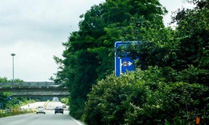 La giungla avanza sulle strade provinciali