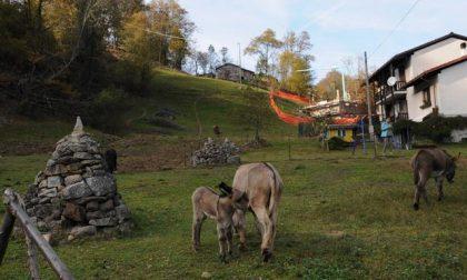 Giallo a San Paolo Cervo: 43 bestie sterminate