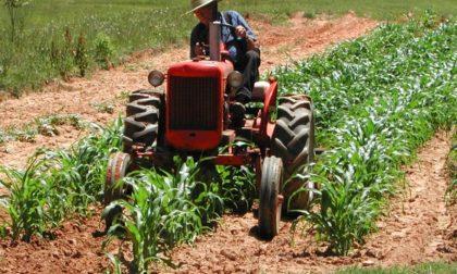 Cimice killer, gli agricoltori biellesi protestano sui trattori