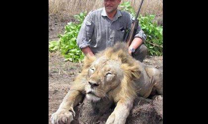 Il veterinario posa accanto al leone ucciso: sdegno sul web