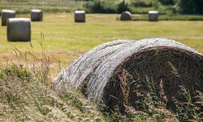 Piemonte, bando da 2 milioni per migliorare le aziende agricole