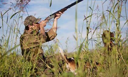 """Il 20 apre la caccia. Dellarovere: """"Su alcuni branchi previsto un maggior numero di cacciatori"""""""