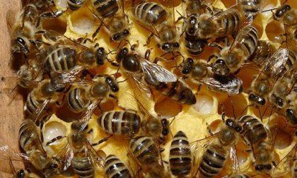 """""""Vola"""" via… con le api biellesi doc"""