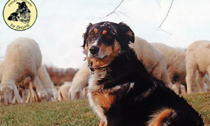 """È ufficiale, riconosciuta la razza """"Cane di Oropa"""""""