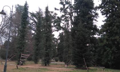 Cinque nuovi alberi ai giardini Zumaglini