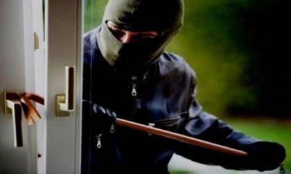 Vede il ladro mentre forza una finestra