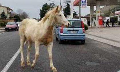 Due cavalli scappano dal padrone e vanno a spasso per il paese