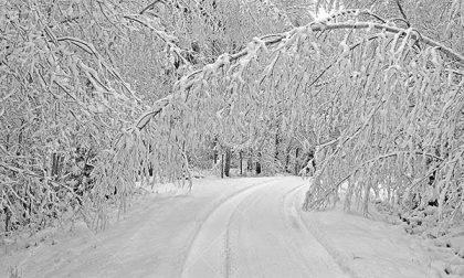 In valle tanta neve sugli alberi, che si piegano sulle strade