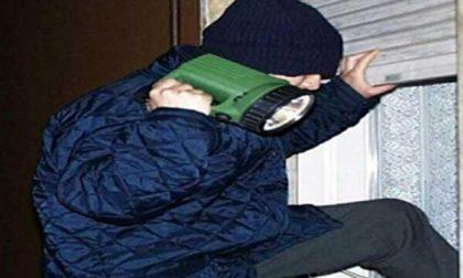 Ladro filmato e identificato