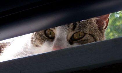 """""""Chi ha gatti faccia attenzione: qualcuno li aggredisce"""""""