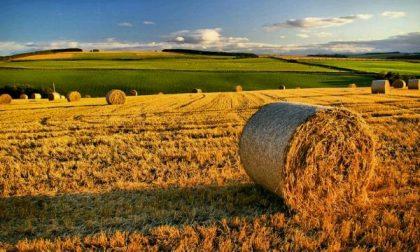 Agricoltura, dalla Regione contributi per 9 milioni