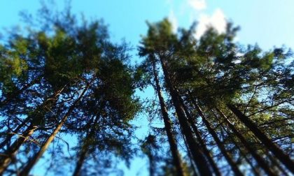 Ambiente, la situazione in Piemonte