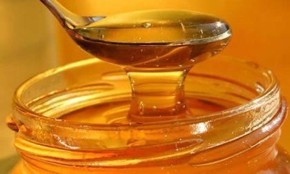Maltempo, Coldiretti: SOS miele dopo la distruzione delle arnie