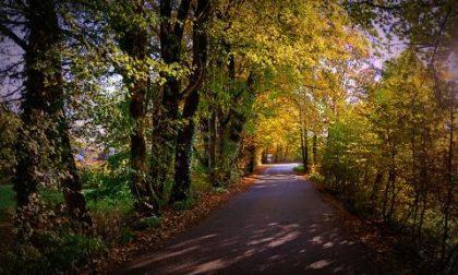 Piante sulle strade: o tagli o paghi