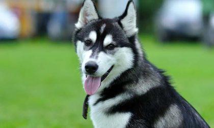 Trova un cane, lo porta a casa e rischia di finire nei guai