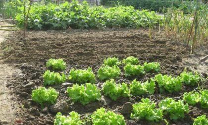"""""""Orti liberi"""", via libera a coltivazione lontano da casa"""