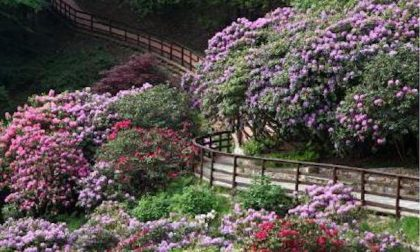 Oasi Zegna, fioritura più bella d'Italia