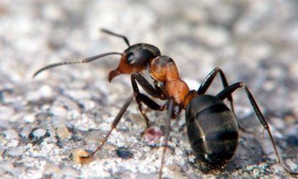 Scarafaggi e formiche in pasticceria