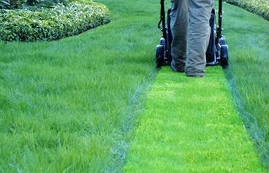 Litigano per l'erba tagliata