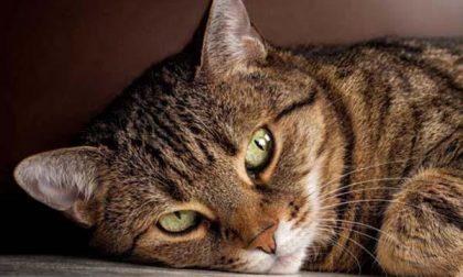 Gatto ucciso con il pallino di una carabina