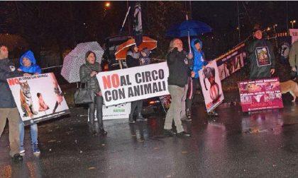Animalisti contro il circo: «Vergogna!»