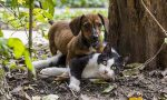 """Aiutatemi a fare la spesa per cani e gatti di famiglie indigenti"""