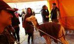 """Animalisti al circo Martin: """"Nessun maltrattamento"""""""