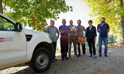 Burcina: grandi pulizie nella conca dei rododendri