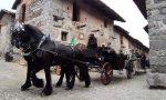 Candelo, la sfilata in paese dei carrettieri FOTO
