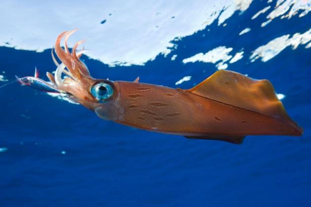 A pesca di calamari con il &#8220&#x3B;kayak fishing&#8221&#x3B;