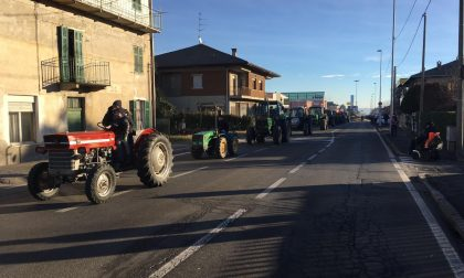 Vigliano celebra Sant'Antonio Abate FOTO