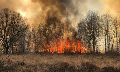 Ancora fiamme in Baraggia, gravi danni all'ecosistema