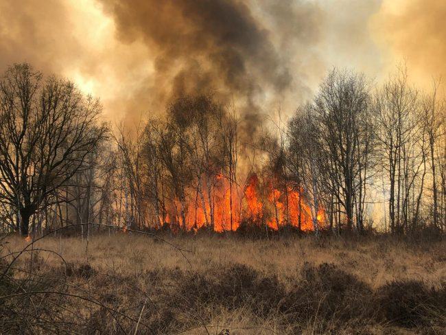 Ancora fiamme in Baraggia, gravi danni all&#8217&#x3B;ecosistema