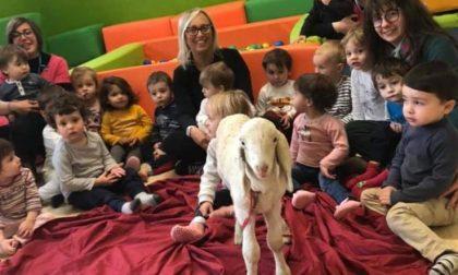 L'agnellino entra nelle scuole biellesi