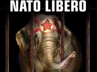 """""""No animali al circo"""": sit in di protesta"""