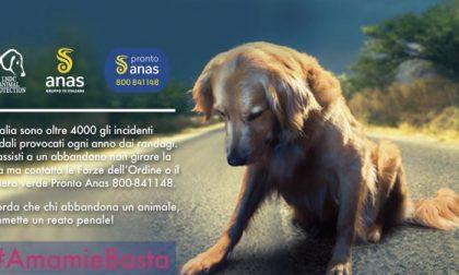 Abbandono animali, al via la campagna #amamiebasta