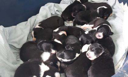 I 14 cuccioli ritrovati a Portula godono di ottima salute