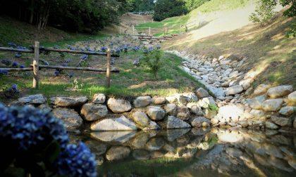 Burcina: un ruscello tra le ortensie nella 'nuova' Valfenera