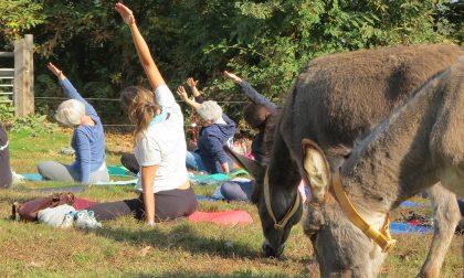 A Sala Biellese si fa yoga in mezzo agli asinelli