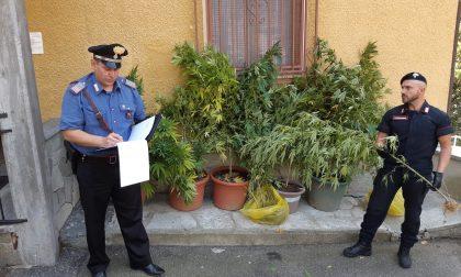 Coltivare marijuana in casa non è più reato. La sentenza della Cassazione