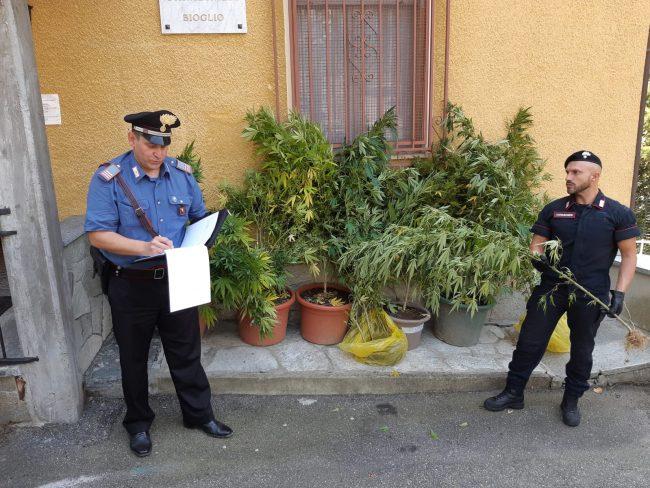Serre di cannabis a Bioglio scoperte dai carabinieri