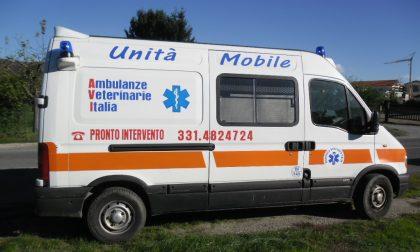 In arrivo le ambulanze per... animali